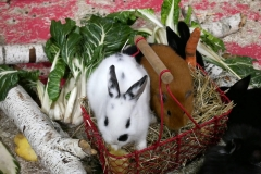 Animalia lapin hamster