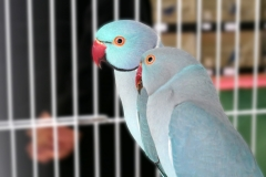 Animalia oiseaux