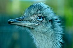 bird-928696_1920