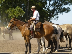horses-52701_1920