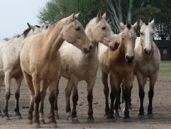 horses-893033_1920