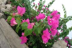 Flore de Da Nang