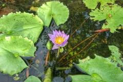 Lotus Da Nang