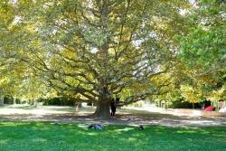 Parc Borély nature