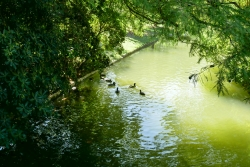Parc Borély marre aux canards