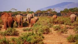 elephant-2668675_1920