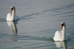 balade Lagune de Berre