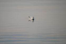 Oiseau Lagune de Berre