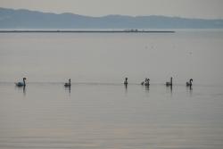 Lagune de Berre écologie
