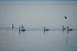 Lagune de Berre plein air