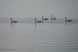 Lagune de Berre repos
