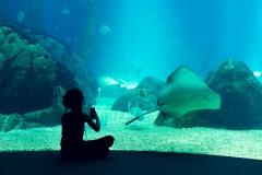 Lisbonne oceanarium