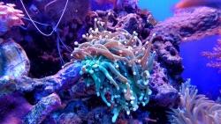 corail Polynésie française