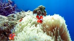 Polynésie française flore aquatique