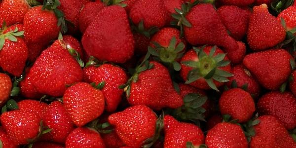fraise nature
