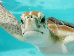 Mexique : partir à la découverte de la Basse Californie, aquarium du monde