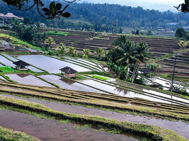 Terre de Bali