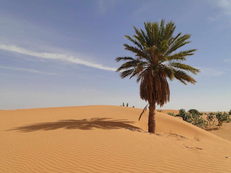 Désert Mauritanie
