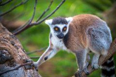 Vacances séjour écologique nature et découverte en Madagascar