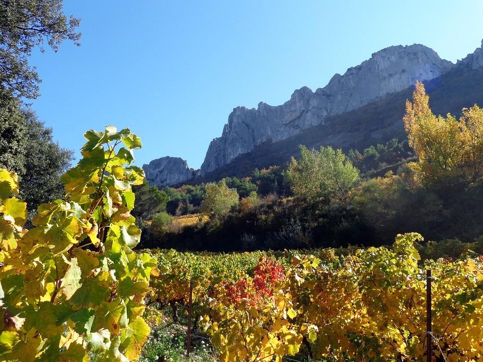 Faire une randonnée pédestre en Provence : Les Dentelles de Montmirail